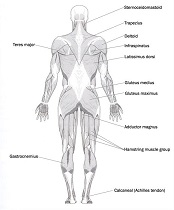 Health science courses online human biology courses home study gain an advanced understanding of human physiology fandeluxe Image collections